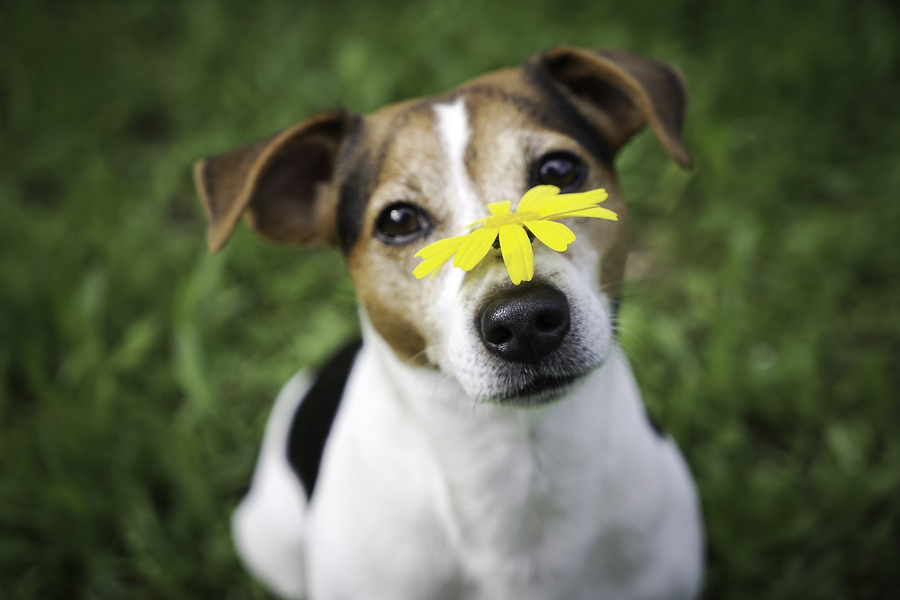 Dog Names WoofTop 10 Flower or Tree Names for Dogs